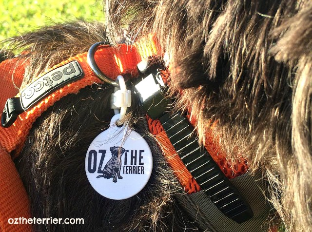5 Top IDs for your Dog - tags from Dog Tag Art