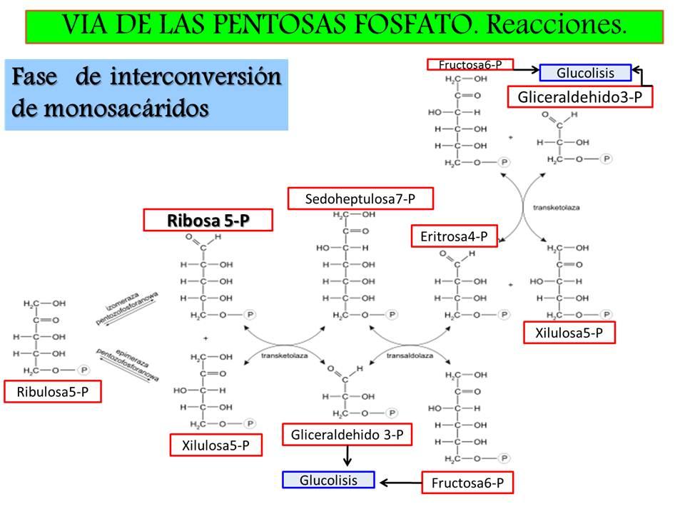 Advertencia: dieta metabolismo acelerado haylie pomroy