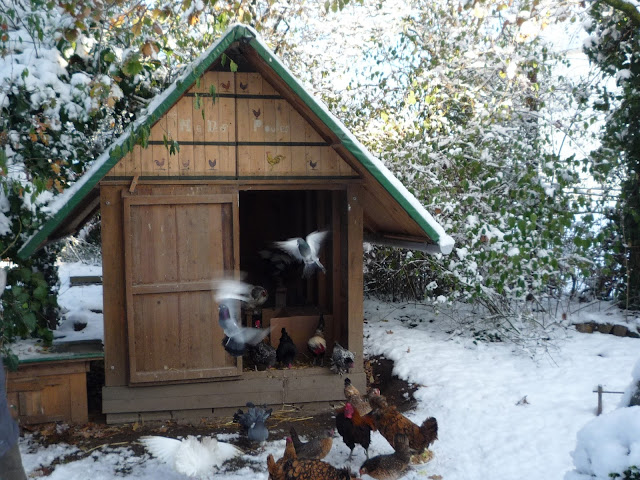 Pallet wood hen house decorated with natural pigments