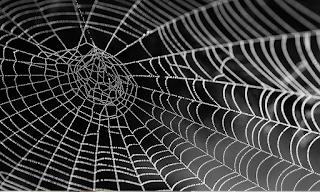 Αυτή είναι η αράχνη που το δηλητήριό της προκαλεί 4ωρη στύση -ΒΙΝΤΕΟ