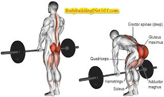 Deadlifts help in building a lot of body muscles, including in the lower and upper back, abs, arms and upper  legs. Deadlifts is truly an excellent muscle building exercise for the back part of your body