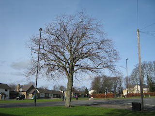Walbottle Village Green