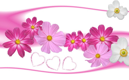 Gambar-Gambar Bunga Berwarna Merah Muda - daily top news