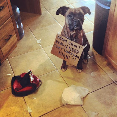 Funny Dog Humor : Did you need that?