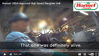 Hormel pork slaughterhouse video pig still alive bleeding on line