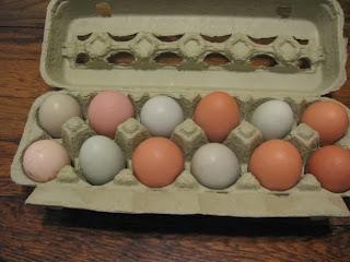 Carton of multi-colored organic eggs