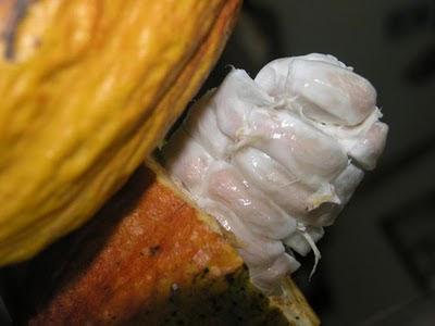 mingguan mindaniaga: Jadi pemproses koko terbesar di Asia  mingguan mindan...