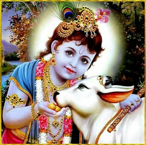 Sweet Lord Krishna Photo with Cow