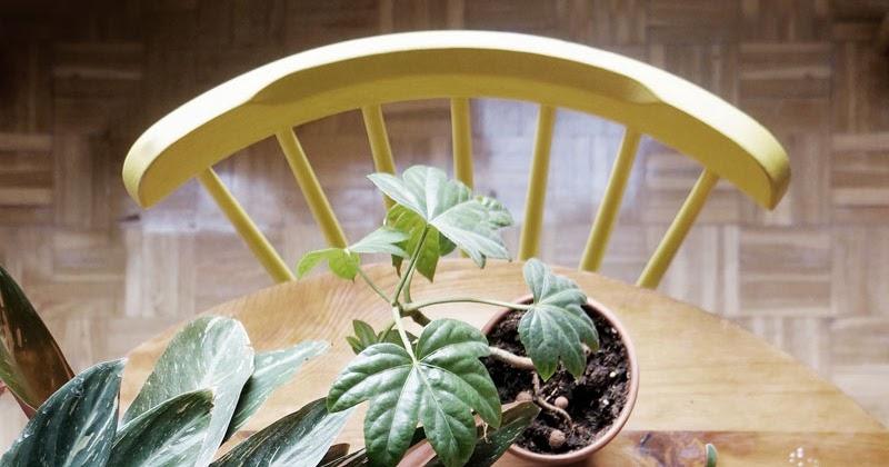 Ideas para decorar con plantas y darle un toque verde a tu for Decorar casa con muebles verdes