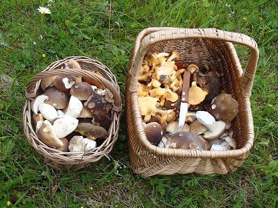 grzyby 2017,grzyby w lipcu, grzyby na Orawie, borowik szlachetny, borowik górski, borowik ceglastopory, lakownica czarnobrązowa