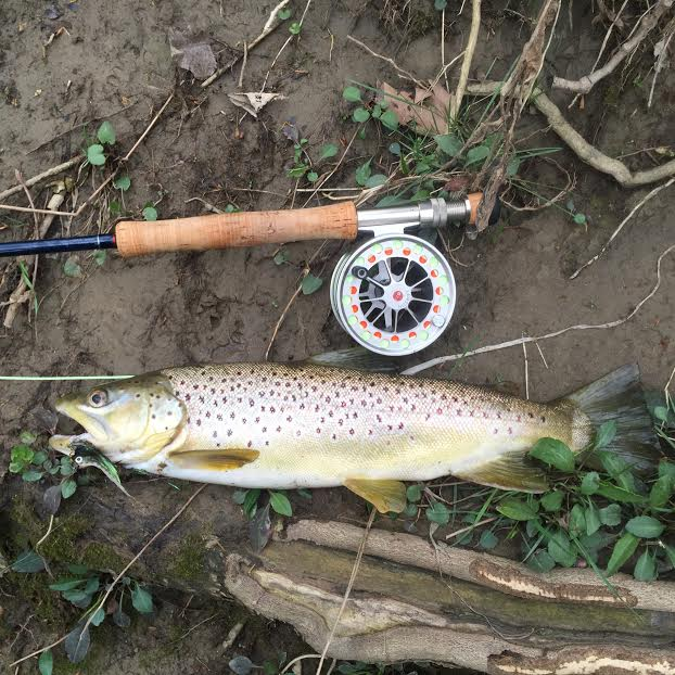 Mad river outfitters fishing reports 3 29 16 for Mad river fishing