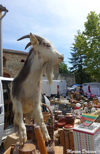 bouc empaillé dans une brocante de village Sud de France