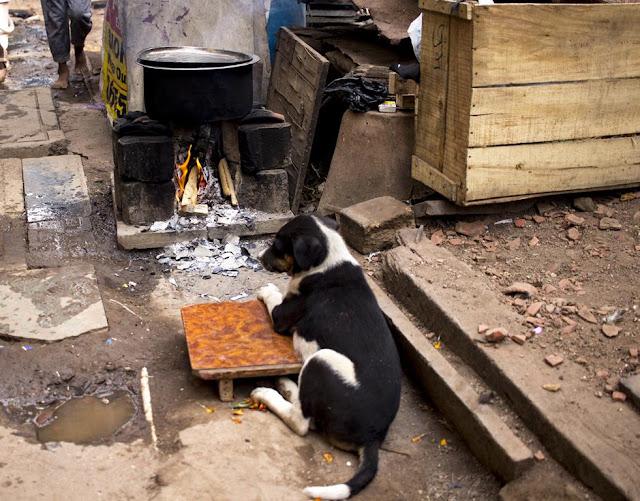 pup, relaxing, alert, kumbharwada, dharavi, mumbai, india, street, street photography, streetphoto,