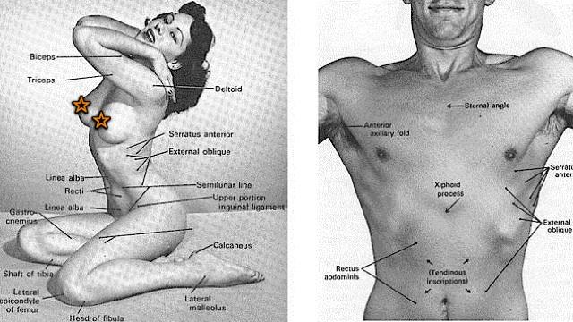 La ciencia es bella: Un libro de anatomía utilizó fotos eróticas