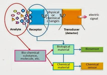 Biologi Evolusioner Adalah