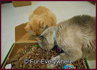 Carmine and Milita check out their Purr*Packs box.