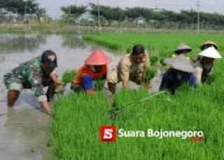 Formulator: Petani Bojonegoro Bagian Timur Lebih Kritis