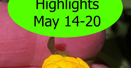 Highlights of the Week May 14-20