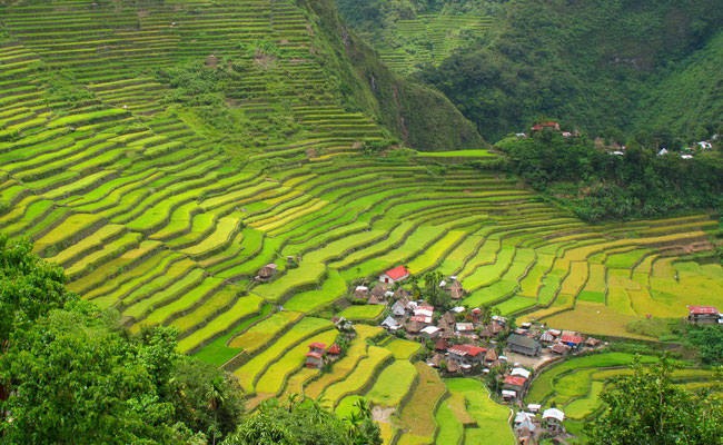 Xvlor.com Banaue rice terraces and agricultural complexity 2000 years ago by Ifugao tribe