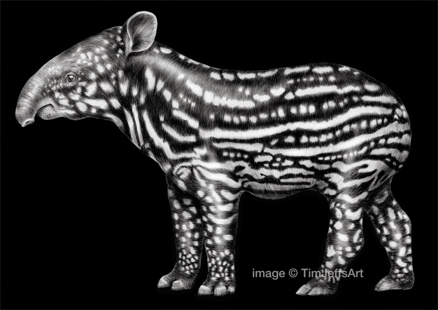 17-Tapir-Tim-Jeffs-All-Creatures-Great-and-Small-Ink-Drawings-www-designstack-co