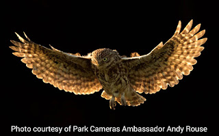 Owl image by Andy Rouse