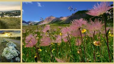 Paisajes de flores silvestres. Fotografías premiadas en IGPOTY N.9: Wildflower Landscapes