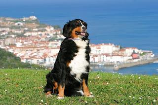 Doit-on partir avec son chien en vacances?