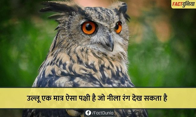 nature-animal-fact-hindi-owl