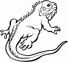 Adorable Lizard Coloring Pages For Print