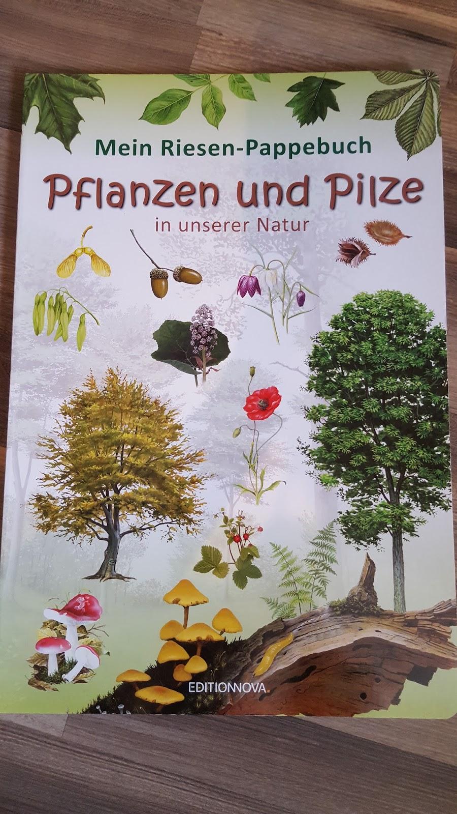 grundschultante bilderbuch pflanzen und pilze in unserer natur. Black Bedroom Furniture Sets. Home Design Ideas