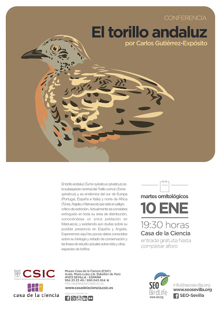 Conferencia: El torillo andaluz. Por Carlos Gutiérrez-Exposito, 10 de Enero 2017. Grupo Local SEO-Sevilla.