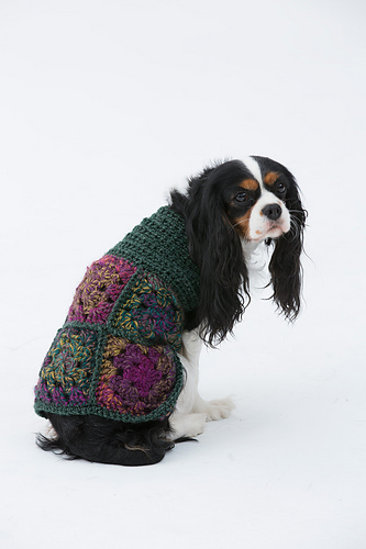 Free Crochet Granny Square Dog Sweater : Miss Julias Patterns: Free Patterns - 20 Dog Sweaters to ...