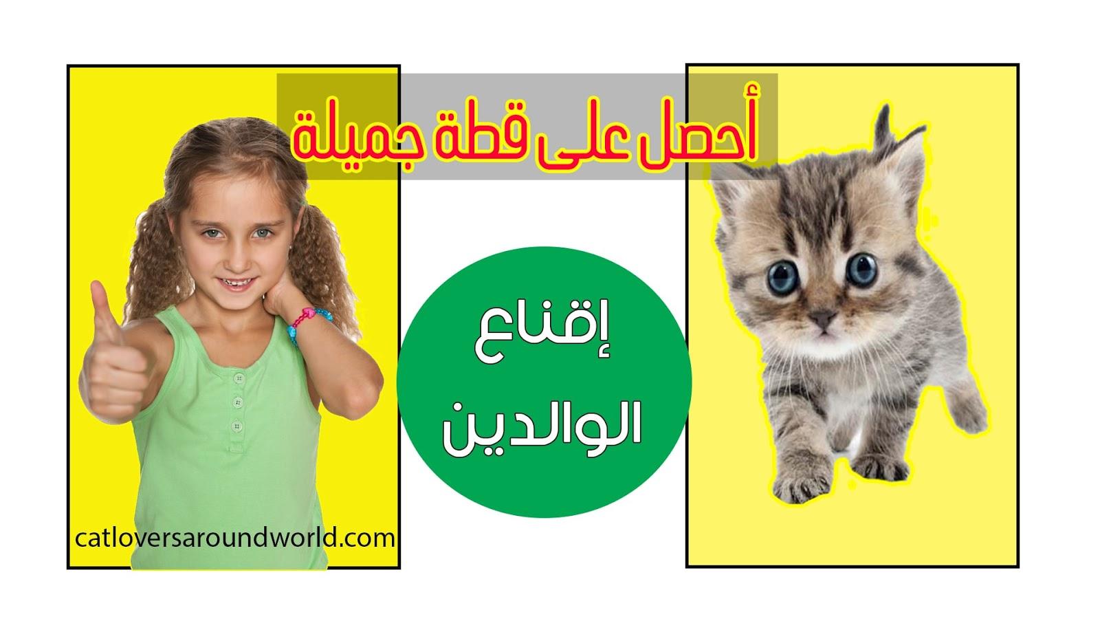 كيف تقنع والديك بشراء قطة ؟ إقناع الأهل بطرق مجربة