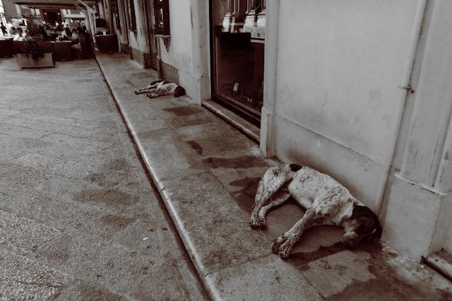 Śpiace psy w Trapani