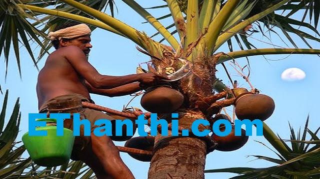 பதநீர் எப்படி உருவாகுகிறது என்ற ரகசியம்?   How patanir originated the secret?