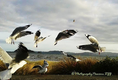 http://www.photographypassions.xyz/2016/04/nature-bird-photography-seagulls.html