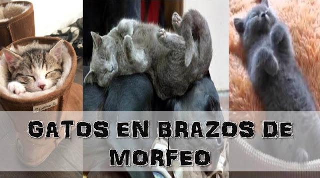 GATOS CAEN EN BRAZOS DE MORFEO DONDE SEA Y COMO SEA…