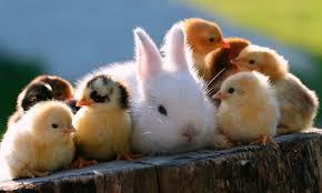 PARA REFLEXIONAR : ANIMALES