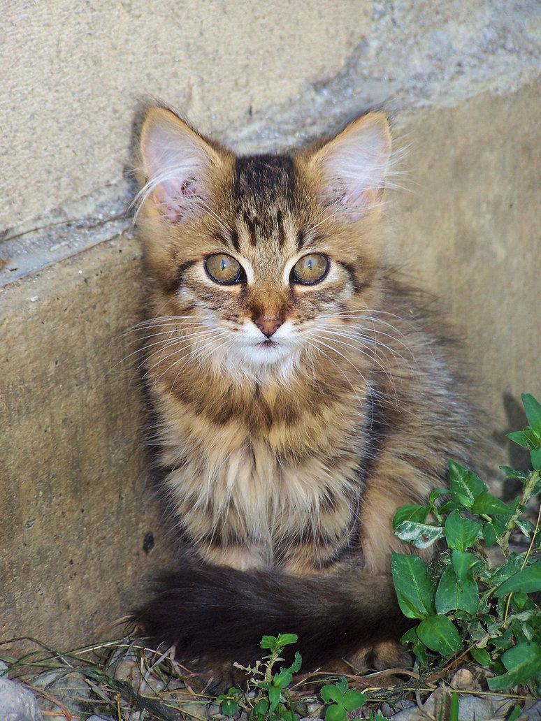 Cute Little Kittens Cute Cats