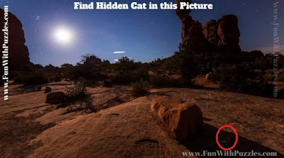 Hidden Animal Picture Puzzle Answer