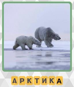 в арктике ходят медведи по льду 4 уровень в игре 600 слов