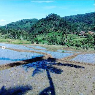 gambar pemandangan sawah cianjur