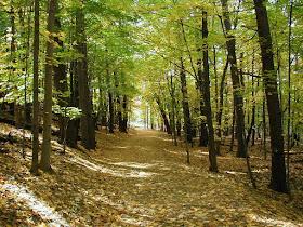 Απαγορεύεται στην Αργολίδα η κυκλοφορία οχημάτων και παραμονή εκδρομέων στα δάση λόγω κινδύνου πυρκαγιάς