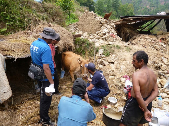 HART, himalayan animal rescue team, pokhara, nepal, sterilization, vaccination, animal rescue, dogs, cats, rescue, treatment, charity, non profit,