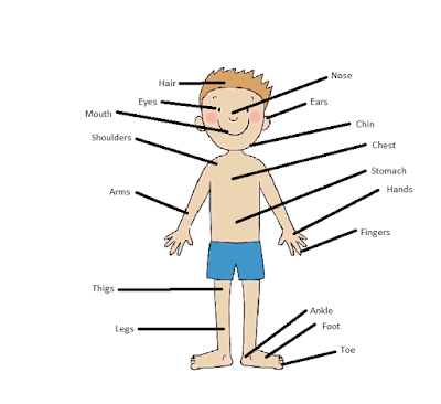 Body parts in english