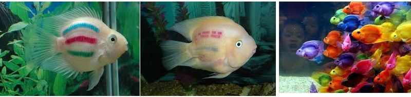Gambar Warna Serta Harga Ikan Parrot, Asal Usul Dan Cara Merawatnya