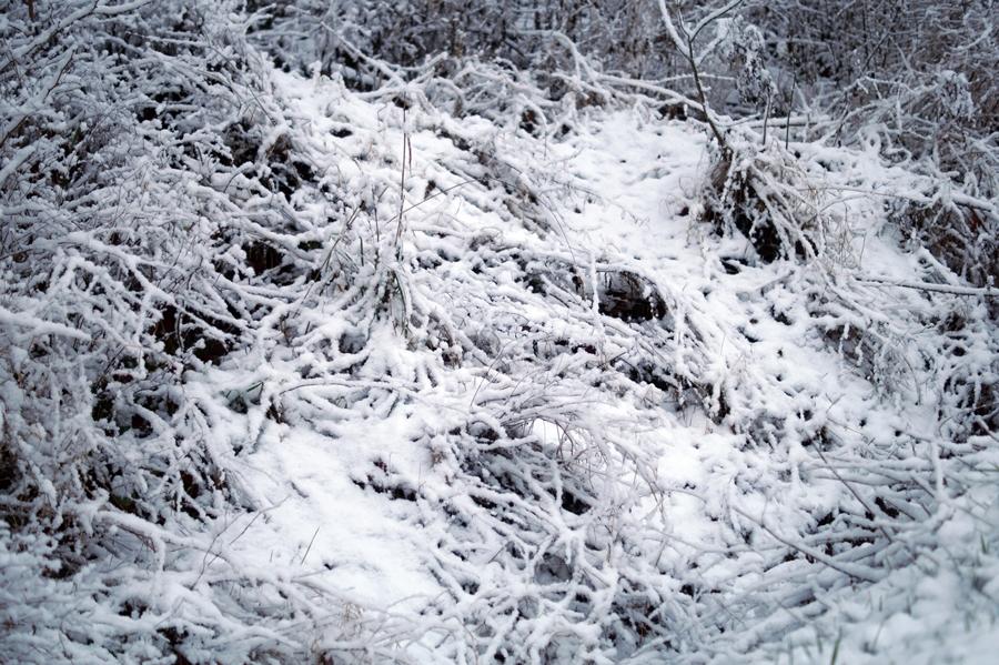 Blog + Fotografie by it's me! - Winter für einen Tag - verschneite Bodendecker