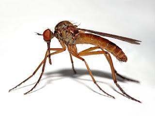 مادة كيميائية تستخدم لقتل الجراثيم والحشرات