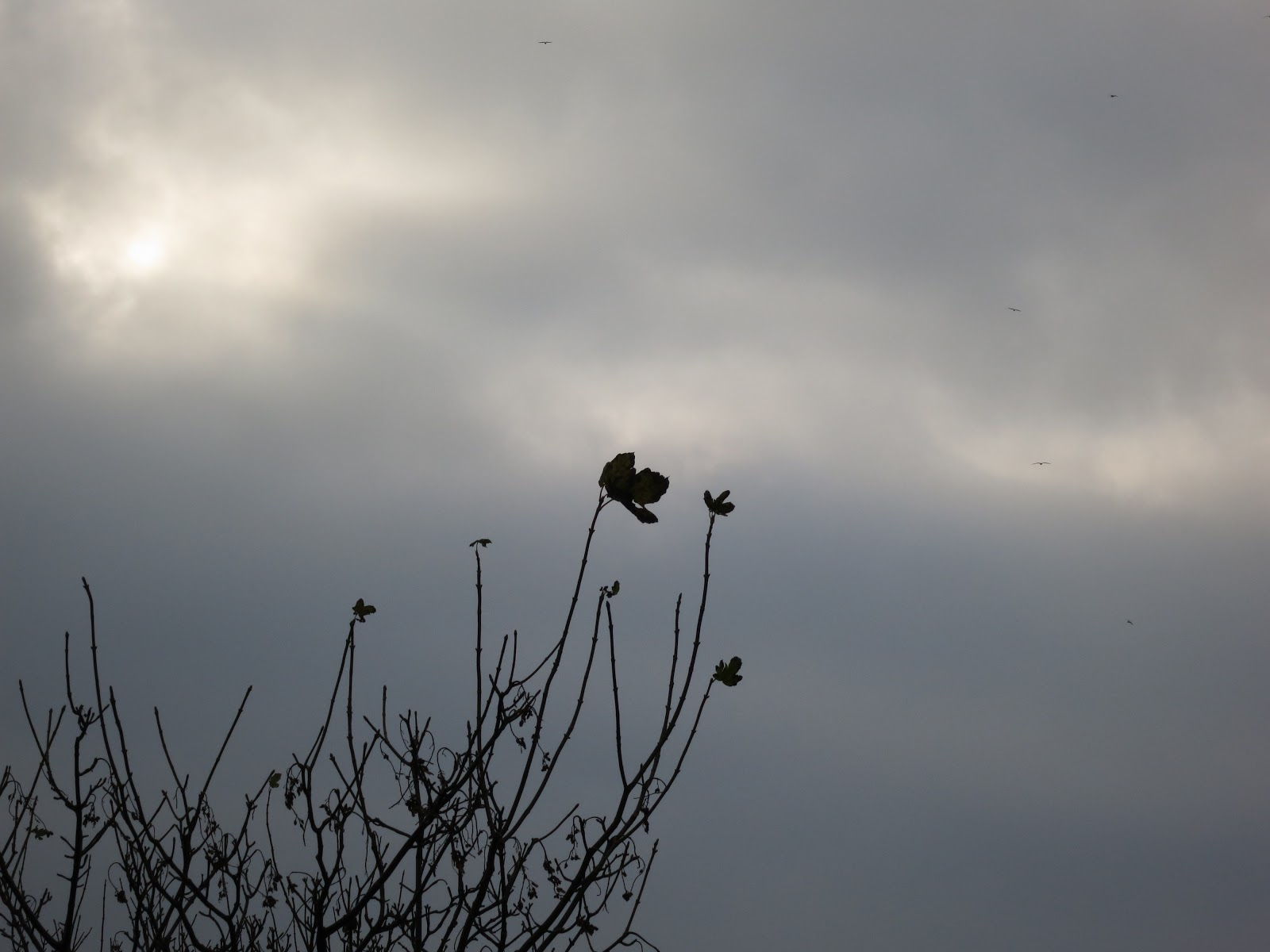 One large and several small leaves of the tree silhouetted against a grey sky