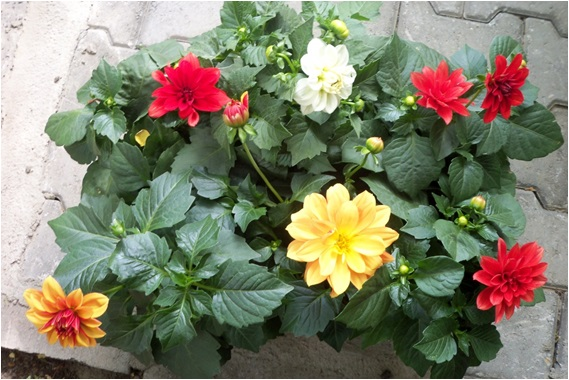 erkeğe hediye çiçek